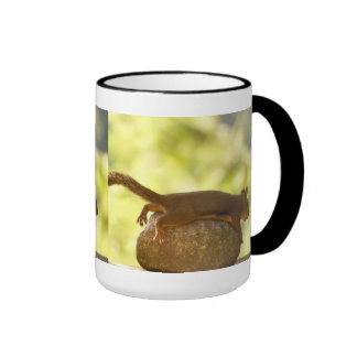 Squirrel Lying Down Photo Ringer Coffee Mug