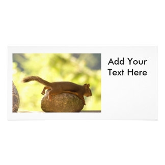 Squirrel Lying Down Photo Picture Card