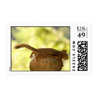 Squirrel Lying Down Photo Postage Stamp