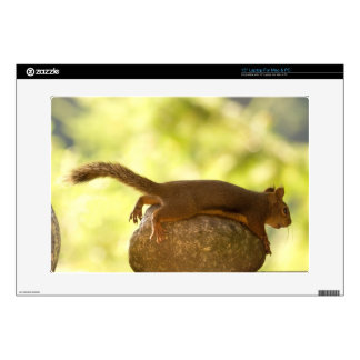 Squirrel Lying Down Photo Skin For Laptop