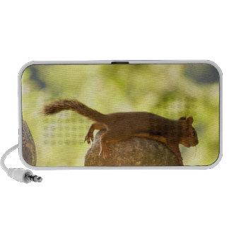 Squirrel Lying Down Photo iPod Speaker