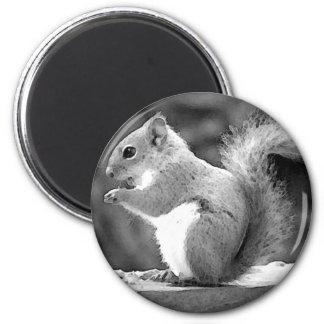 Squirrel 2 Inch Round Magnet