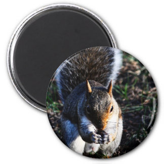 Squirrel Refrigerator Magnets