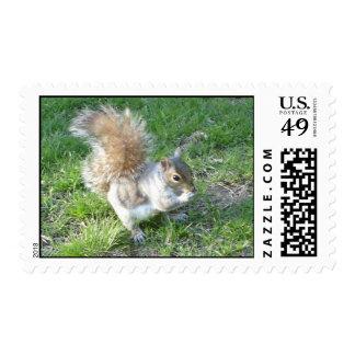Squirrel Mail Postage Stamp