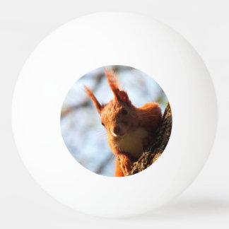 Squirrel Mammal Rodent Ping-Pong Ball