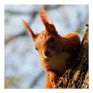 Squirrel Mammal Rodent Poster