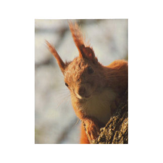 Squirrel Mammal Rodent Wood Poster