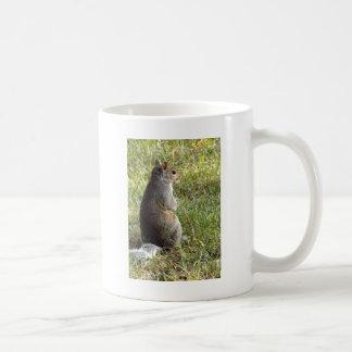 Squirrel Meditations Mug