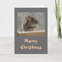 Squirrel Merry Christmas Holiday Card