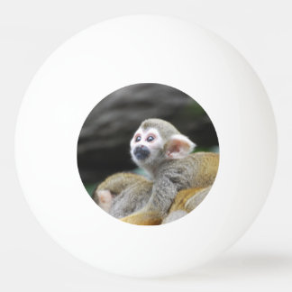 squirrel-monkey-39.jpg ping pong ball