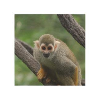 squirrel-monkey-8.jpg wood print