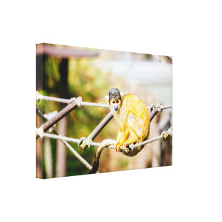 Squirrel Monkey, Animal Photography Gallery Wrapped Canvas