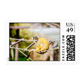 Squirrel Monkey - Animal Photography Postage Stamps