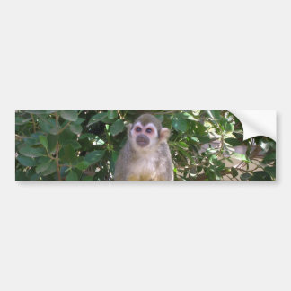 Squirrel Monkey Bumper Sticker Car Bumper Sticker