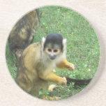 Squirrel Monkey Coaster