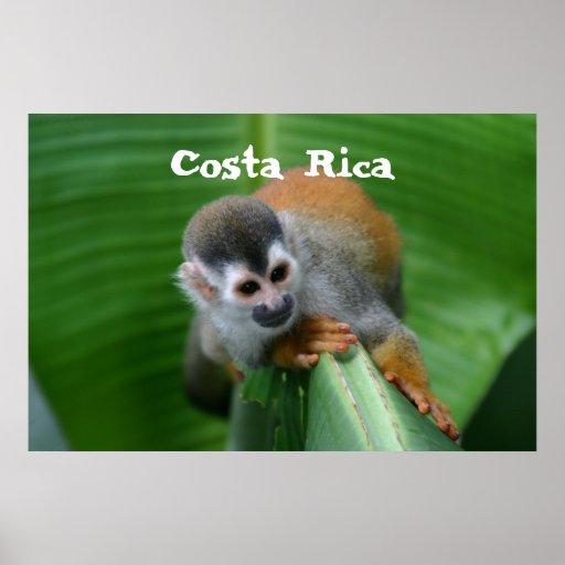 Squirrel Monkey Costa Rica Poster