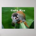 Squirrel Monkey Costa Rica Print