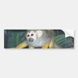 Squirrel Monkey Crouching Car Bumper Sticker