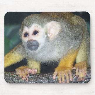 Squirrel Monkey Crouching Mouse Pad
