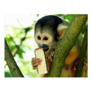 Squirrel Monkey Eating a Wafer Biscuit Postcard