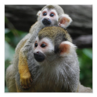 Squirrel Monkey Family Poster