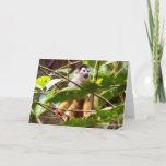 Squirrel Monkey Greeting Card