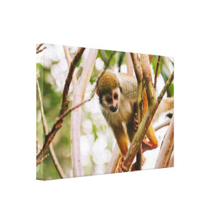 Squirrel Monkey In A Tree Gallery Wrapped Canvas