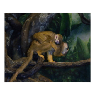 Squirrel Monkey Mother and Baby Posters