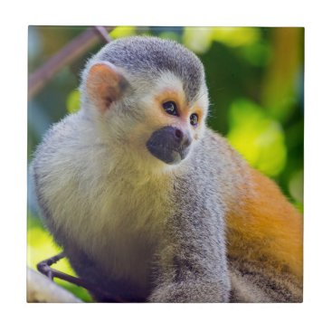 Squirrel monkey on a branch - Costa Rica Ceramic Tile