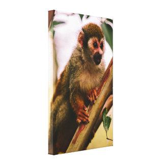Squirrel Monkey Portrait Canvas Print