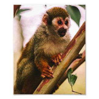 Squirrel Monkey Portrait Art Photo