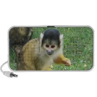 Squirrel Monkey Speakers
