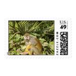 squirrel monkey stamp