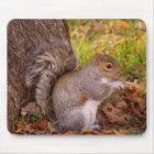 Squirrel Mosue Pad Mouse Pad