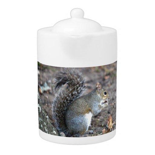 Squirrel Munching on an Acorn