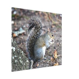 Squirrel Munching on an Acorn Canvas Print