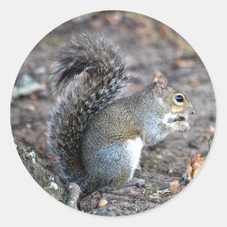 Squirrel Munching on an Acorn Classic Round Sticker