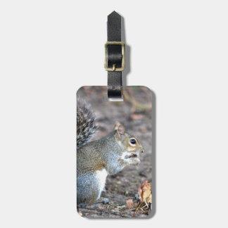 Squirrel Munching on an Acorn Luggage Tag