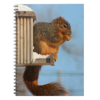 Squirrel Note book