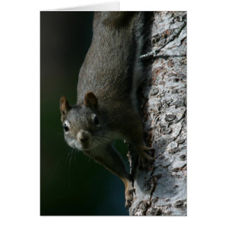 Squirrel Notecard 1 Card