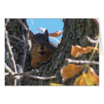 Squirrel Notecard Greeting Card