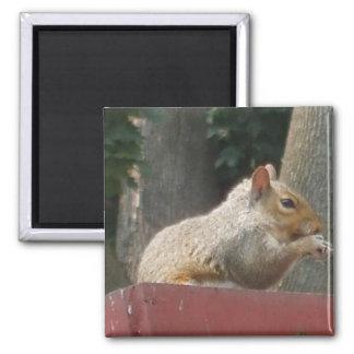 Squirrel Nut Magnet