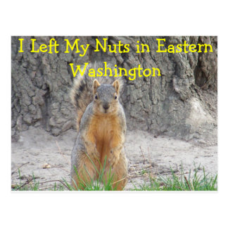 Squirrel Nuts Postcard