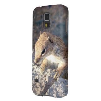 Squirrel of Fuerteventura, Canary Islands, Spain Galaxy S5 Case