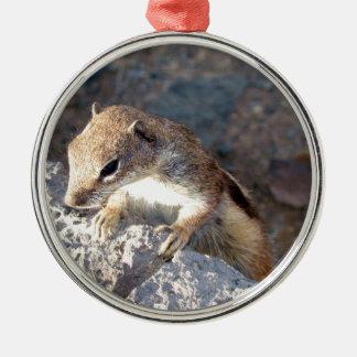 Squirrel of Fuerteventura, Canary Islands, Spain Metal Ornament