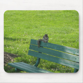 Squirrel on a Bench Mouse Pad