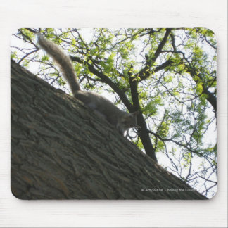 Squirrel on a Branch Mouse Pad