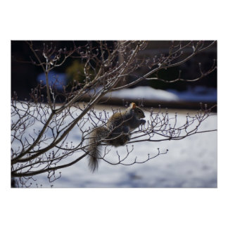 Squirrel on a  cold cherry blossom tree poster