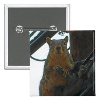 Squirrel on a Pole in Colorado Button