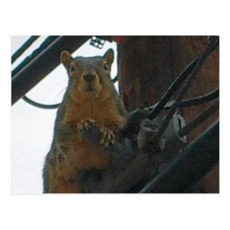 Squirrel on a Pole in Colorado Postcard